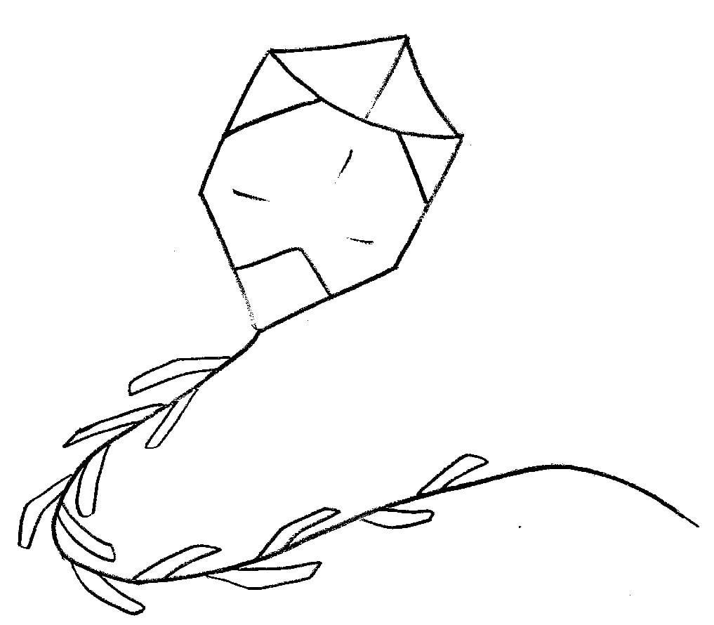 Desenhos De Pipa