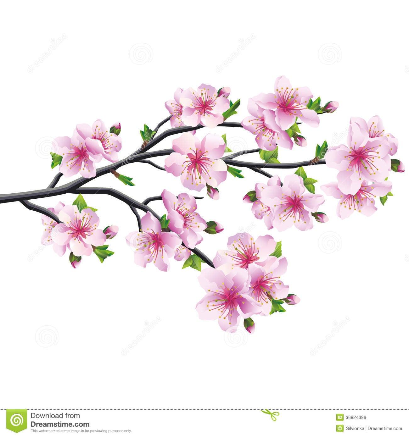 Flor De Cerejeira, árvore Japonesa Sakura Ilustração Do Vetor