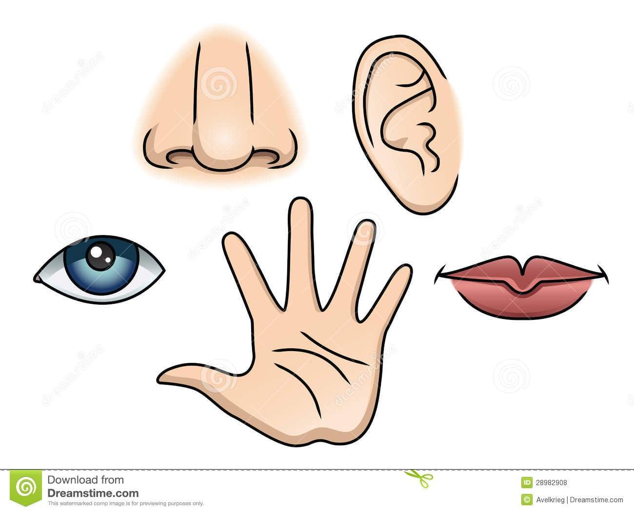 5 Sentidos Ajustados Ilustração Do Vetor  Ilustração De Boca