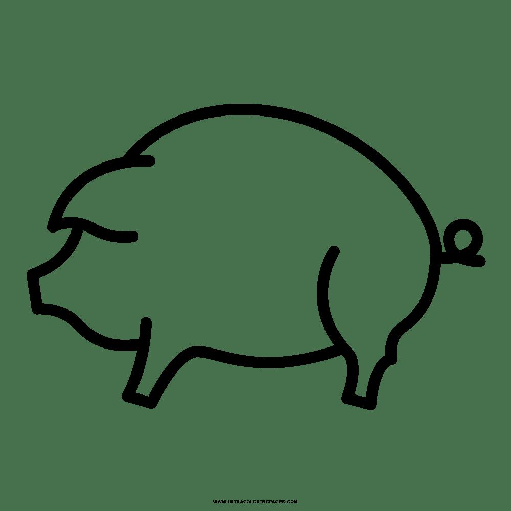 Porco Desenho Para Colorir