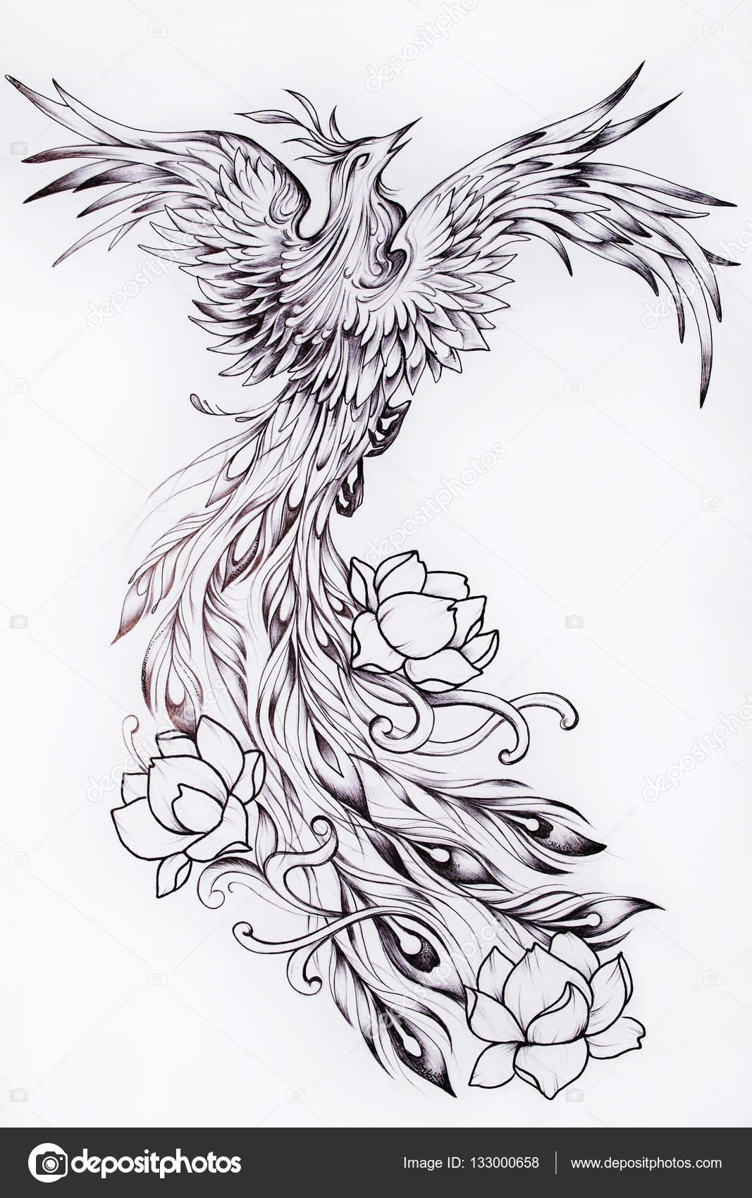Preto E Branco Desenho De Uma Fênix Linda Com Flores — Stock Photo