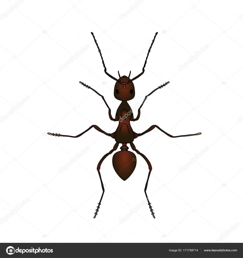 Formica Exsecta  Desenho De Formiga  Formiga, Isolada No Fundo
