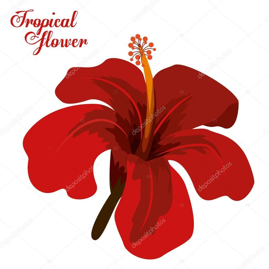 Desenho De Flores Tropicais — Vetores De Stock © Grgroupstock