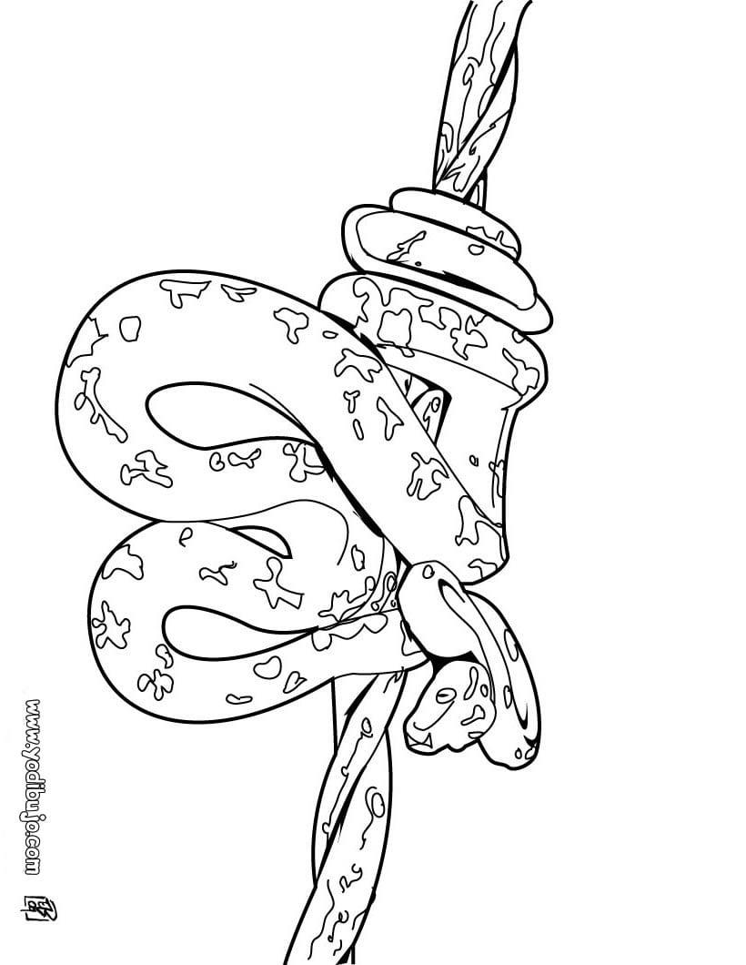 Dibujos Para Colorear Cobra