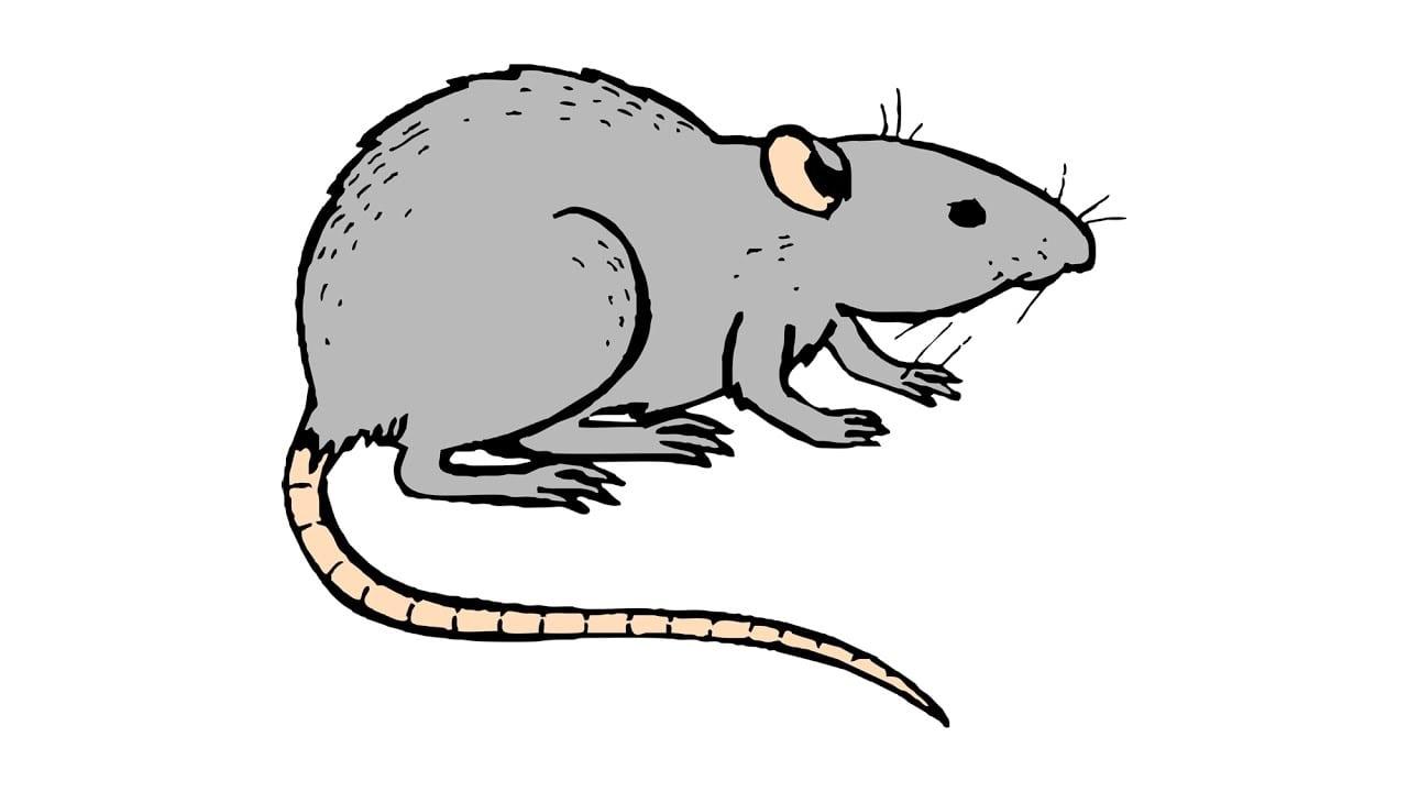 Como Desenhar Um Rato (animais)
