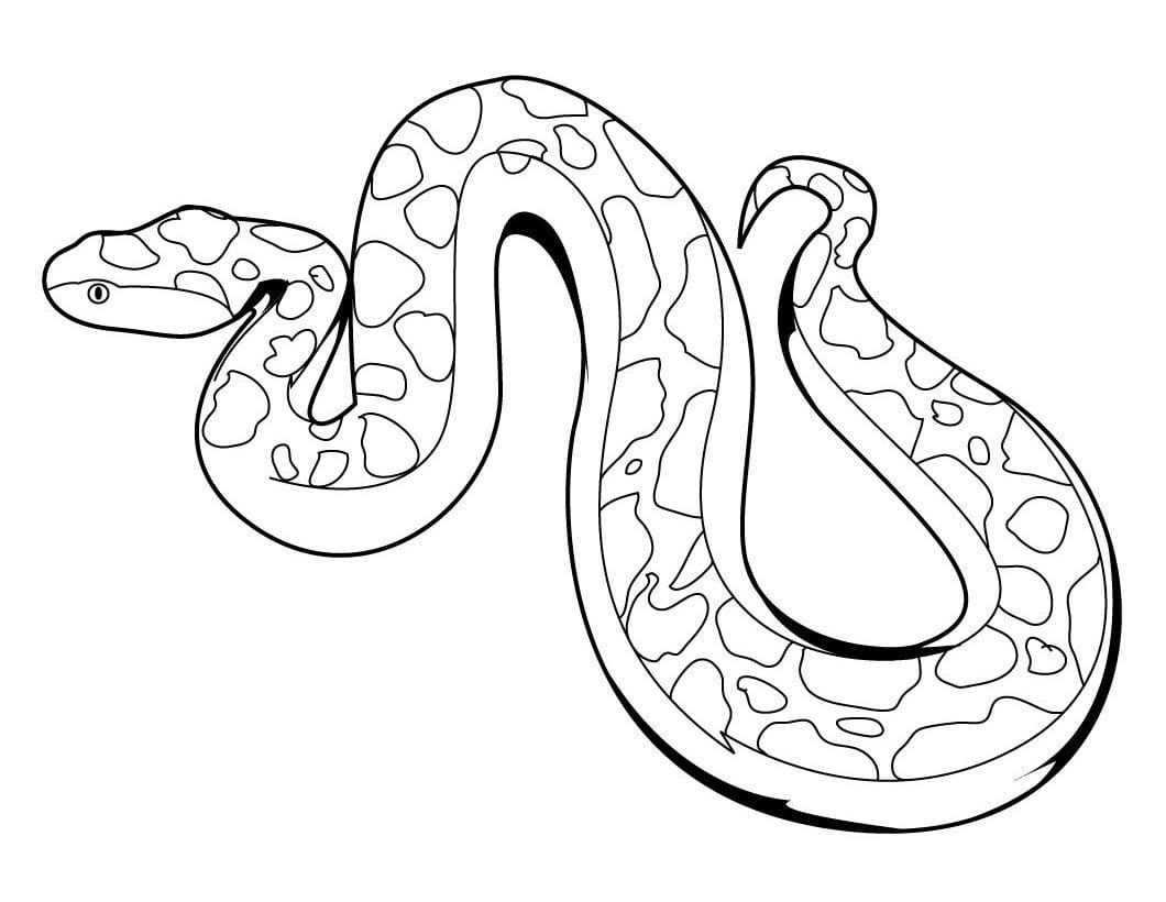 Serpientes Para Pintar    Imágenes Y Fotos