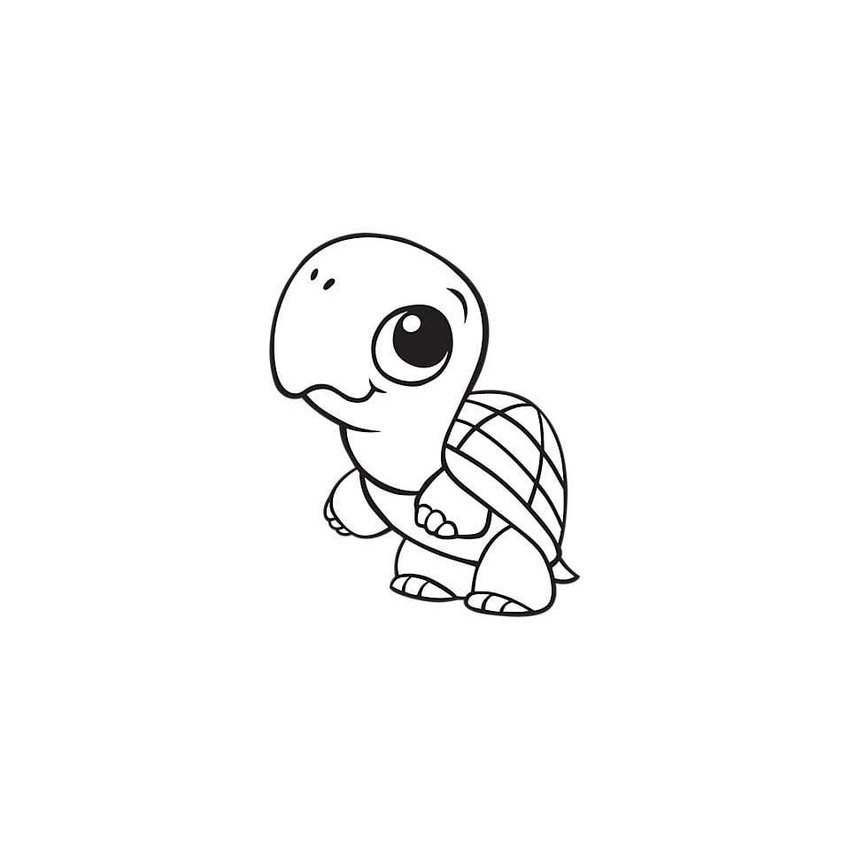 Desenho De Tartaruga Bebê Para Colorir