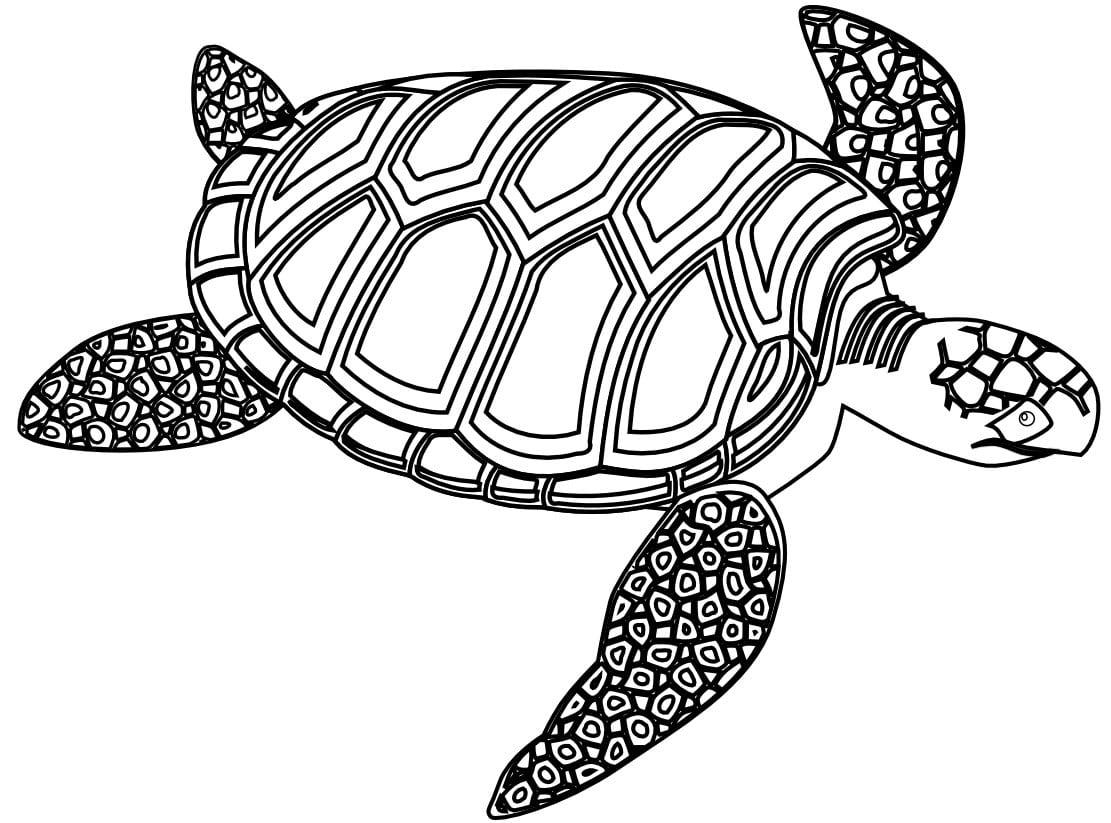 Imagem De Tartaruga Marinha Para Colorir – Pampekids Net