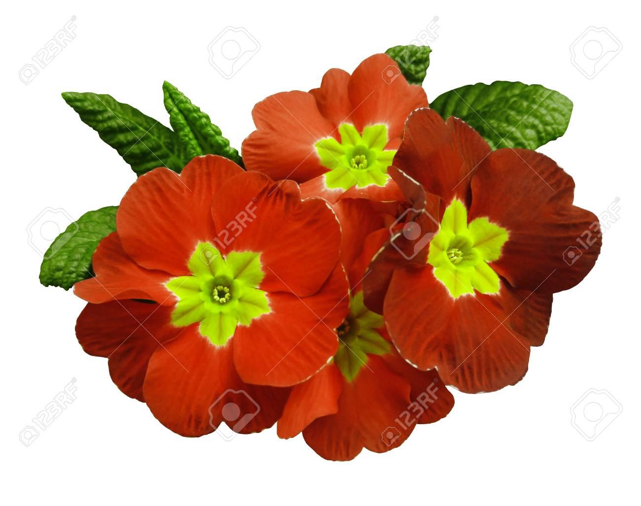 Flores Para Recortar  Flores Para Colorear Grandes  Flores Para