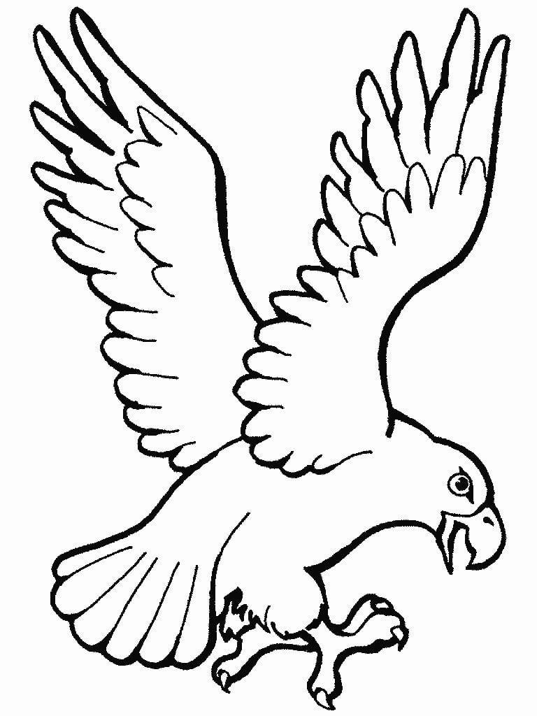 Desenhos De Águias Para Imprimir E Colorir