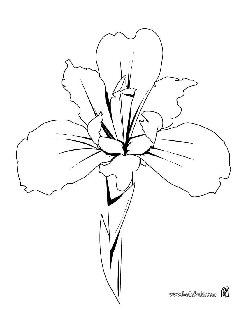 Desenhos Para Colorir De Desenho De Uma Bela Orquídea Para Colorir