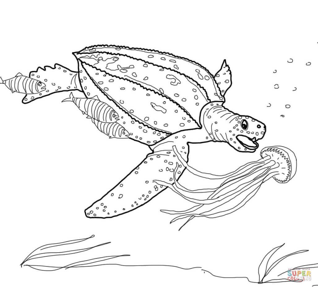 Desenho De Tartaruga