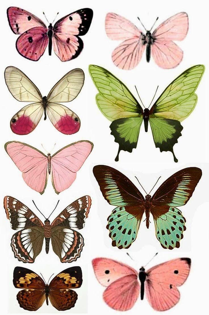 Imprimolandia  Mariposas Para Imprimir