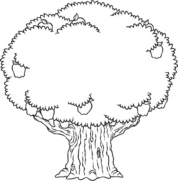 Desenhos De Árvores