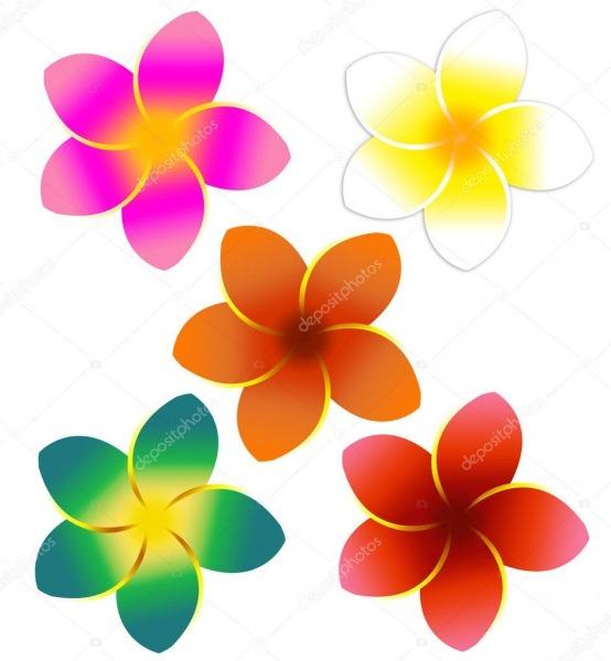 Cinco Flores Coloridas Plumeria — Fotografias De Stock
