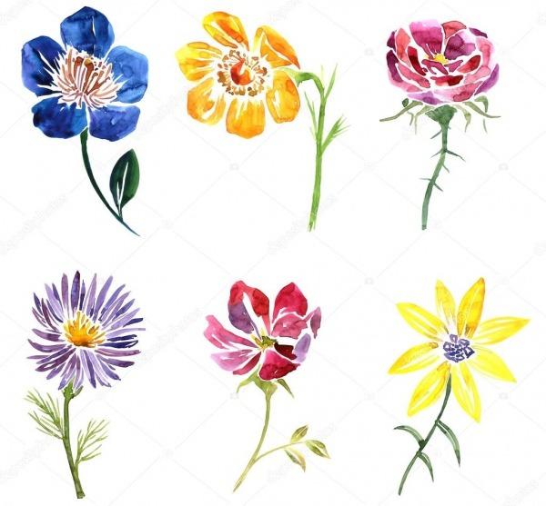 Aquarela Flor Desenho — Fotografias De Stock © Cat_arch_angel