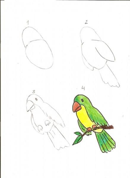 Evangeliza!  Como Desenhar, Papagaio