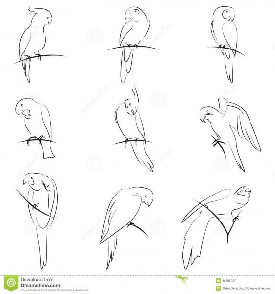 Jogo Do Desenho Do Papagaio Ilustração Do Vetor