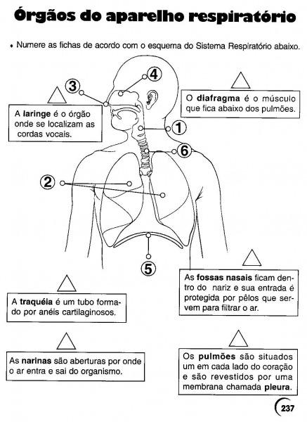 Orgaos Do Corpo Humano Desenho