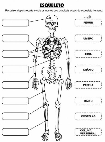 Desenho Dos Órgãos Do Corpo Humano