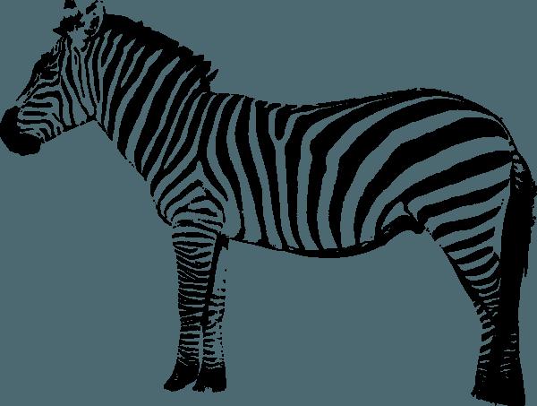 Colorir Zebra – Pampekids Net