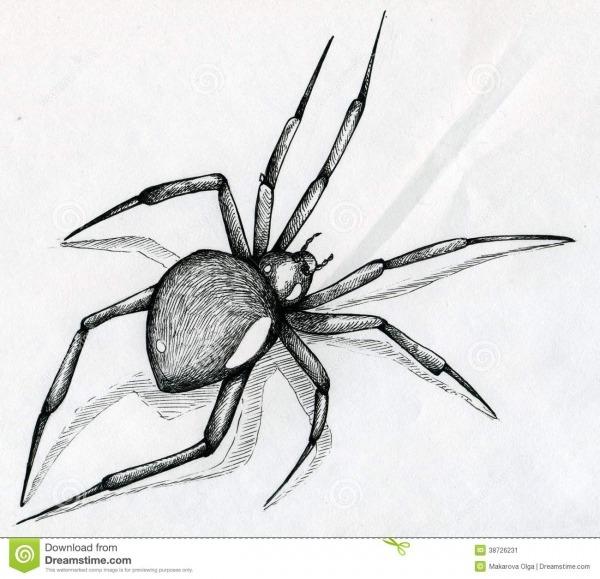 Desenho Da Aranha Da Viúva Negra Ilustração Stock