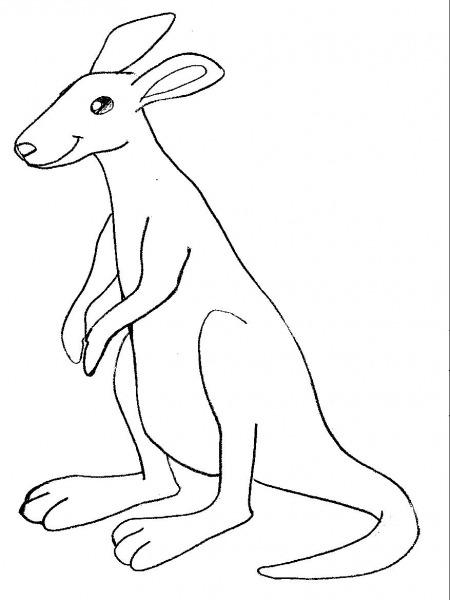 Desenhos Diversos Para Colorir  Desenho De Canguru Para Colorir
