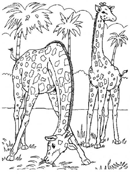 Animais Selvagens Para Colorir – Pampekids Net