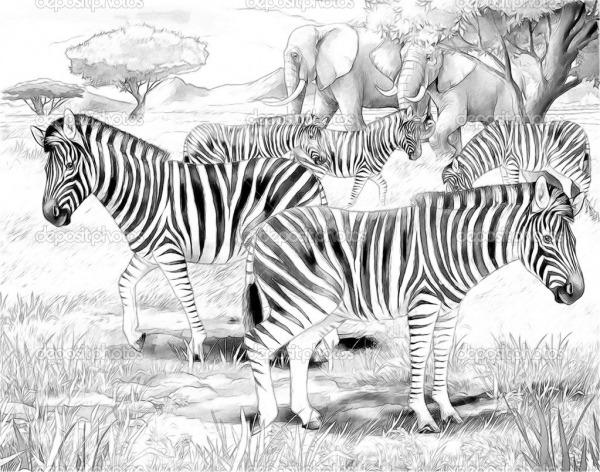 Zebras Para Colorir – Pampekids Net