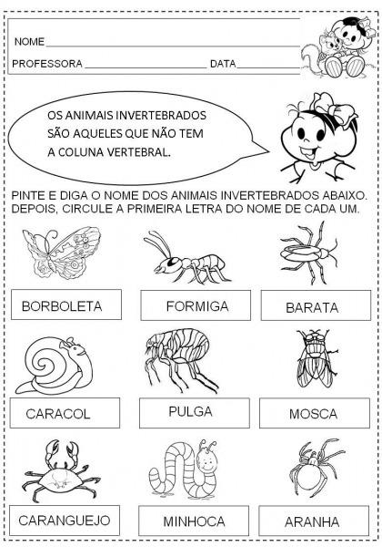 Plano De Aula  Animais Vertebrados E Invertebrados