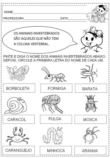 Fotos De Animais Vertebrados Para Imprimir
