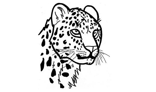 Como Desenhar Uma On̤a Pintada (jaguar, Animais) РMatring Org