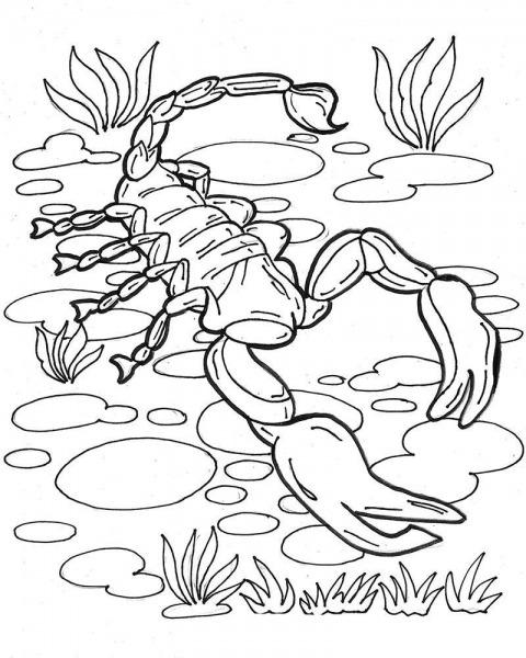 Desenho De Escorpião No Rio Para Colorir