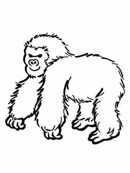 Desenhos De Macacos Para Imprimir E Colorir