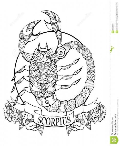 Vetor Do Livro Para Colorir Do Sinal Do Zodíaco Da Escorpião