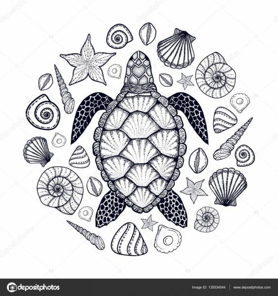 Tartarugas Marinhas E Conchas Em Estilo De Linha De Arte  Mão