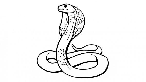 Como Desenhar Uma Cobra (naja, Animais)