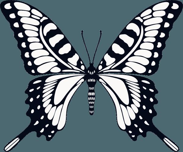 Desenhos De Borboletas Para Imprimir E Colorir