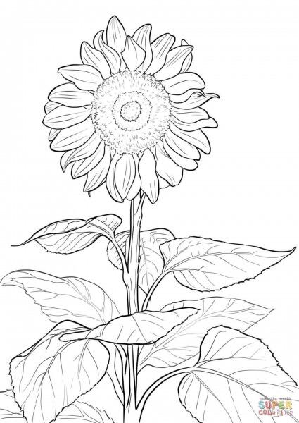 Desenho De Girassol Para Colorir – Pampekids Net