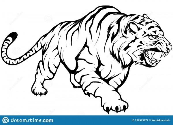 Desenho Do Vetor Do Tigre, Esboço Do Desenho Do Tigre No