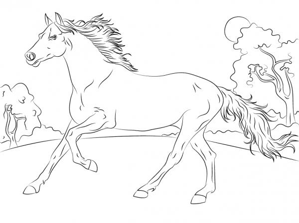 Desenhos De Cavalo Árabe Para Colorir E Imprimir