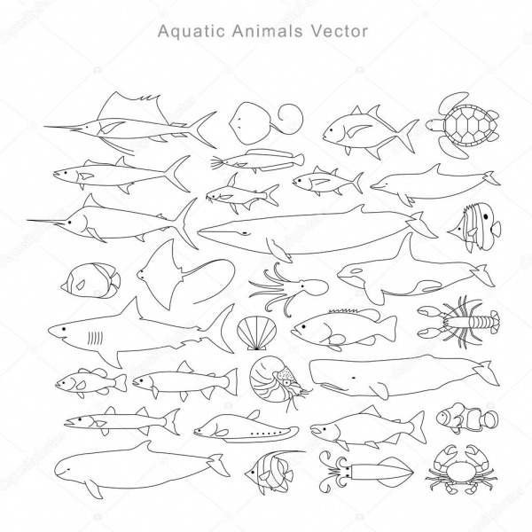 Desenho De Animais Aquáticos, Vetor — Vetores De Stock © Yoyoyai
