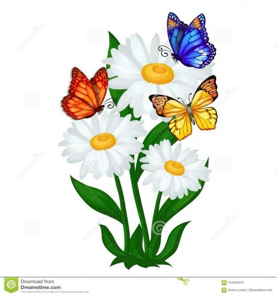 Esboço Do Cartaz Em Um Tema Do Verão Com As Flores Da Camomila E