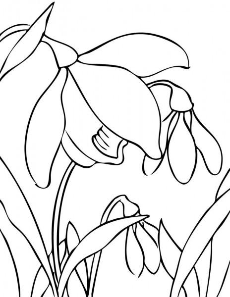 Galeria De Fotos E Imagens  Desenhos De Flores Para Colorir