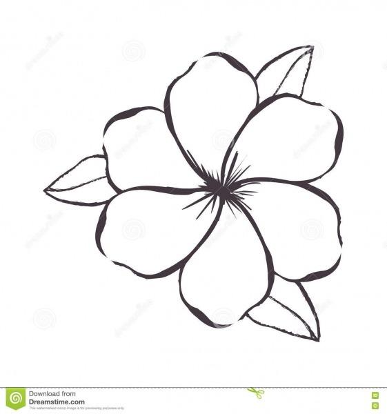 Imagem Delicada Do ícone Do Desenho Da Flor Ilustração Do Vetor