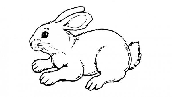 Como Desenhar Um Coelho (animais)