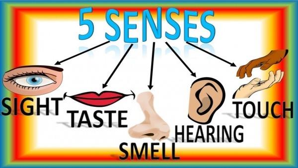 Five Senses For Children With Song, Cinco Sentidos Para Niños En