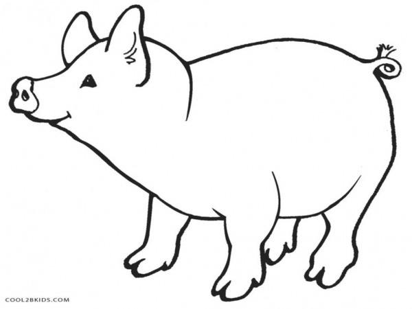 Desenhos De Porcos Para Imprimir E Colorir
