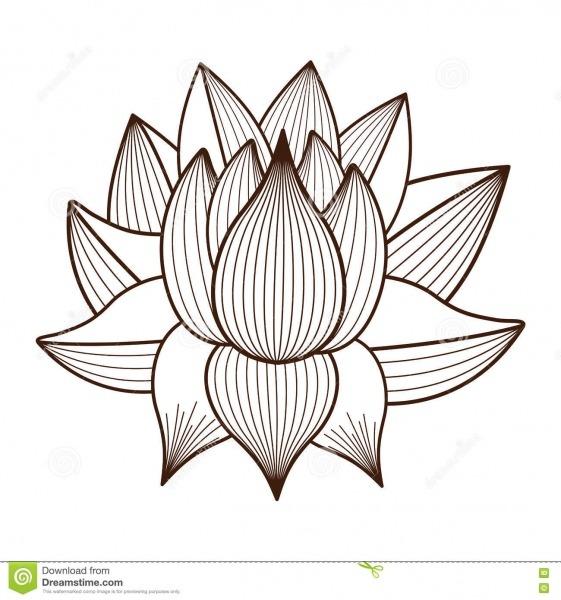 Projeto Isolado Desenho Do ícone Da Flor De Lotus Ilustração Do