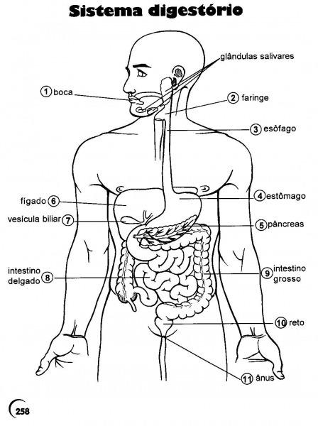 Desenhos Do Corpo Humano Para Imprimir